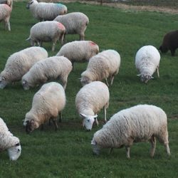 Brook Ridge Farm Testimonial